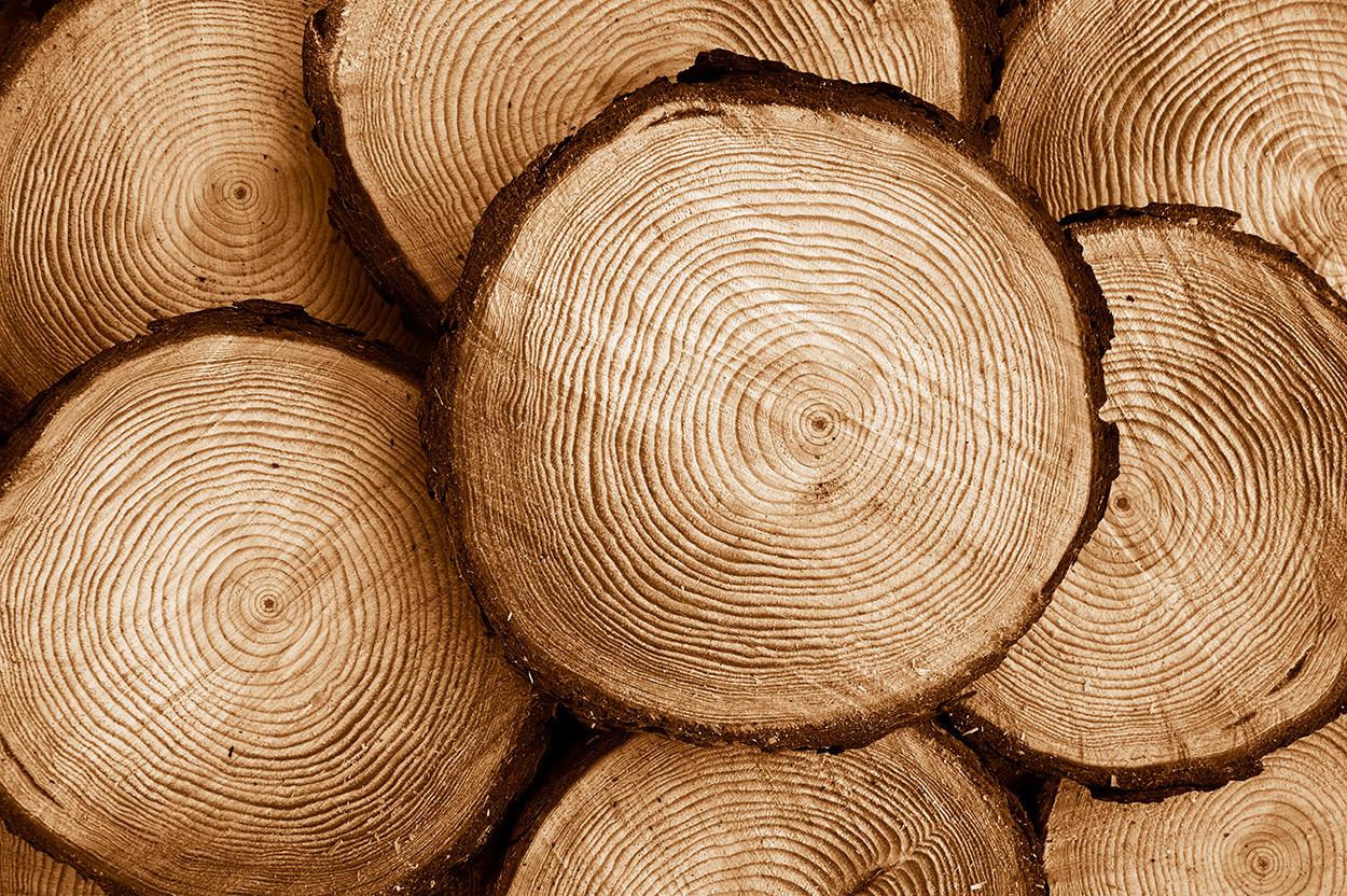 log kayu jati belanda
